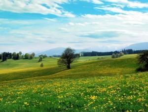 Весна ответственная пора для овощевода